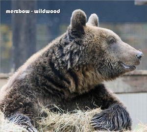 Merzbow_Wildwood